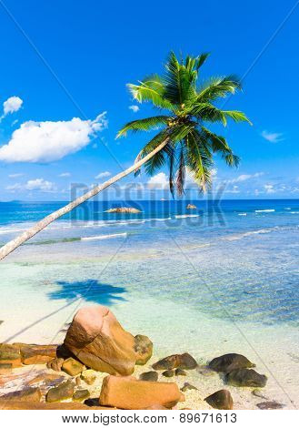 Sea Heaven Palms