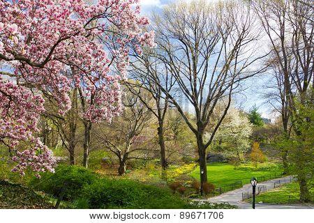 Central Park Spring Landscape Nyc