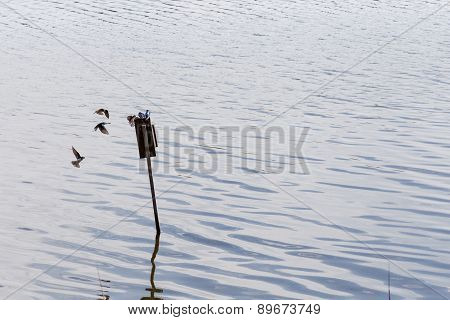 Several sea birds