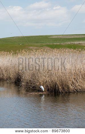 Bird in a marsh