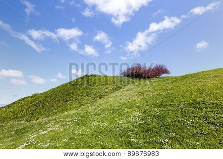 Beautiful Contrast Landscape Green Grass Blue Sky