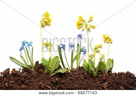 Isolated spring flowers