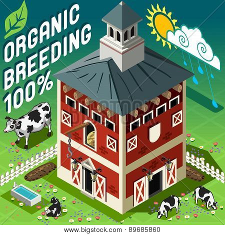 Isometric Cowshed Organic Breeding