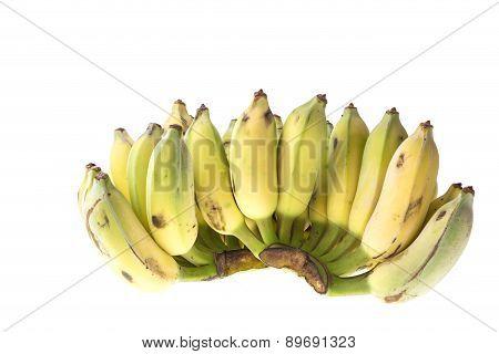 Cultivated Banana, Thai Banana Isolated On White