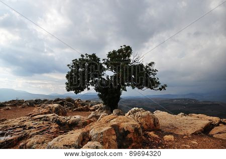 Lonely Tree In The Top Of A Mountain