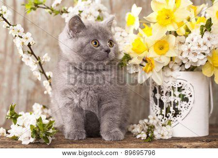 kitten sitting in flowers