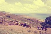 stock photo of herd horses  - herd of horses in the mountains near the stables - JPG
