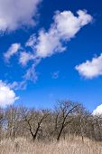 foto of forlorn  - Early spring in an old orchard on the hill - JPG