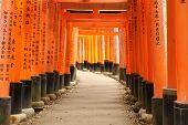 stock photo of inari  - Torii at Fushimi Inari shrine in Kyoto Japan - JPG