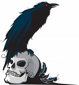 image of raven  - An illustration of a Raven perched on a skull - JPG