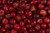 image of peppercorns  - red peppercorns seeds isolated on white background - JPG