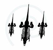 picture of dinosaurus  - Vector Image  - JPG