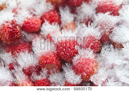Frozen Wild Strawberries Macro View