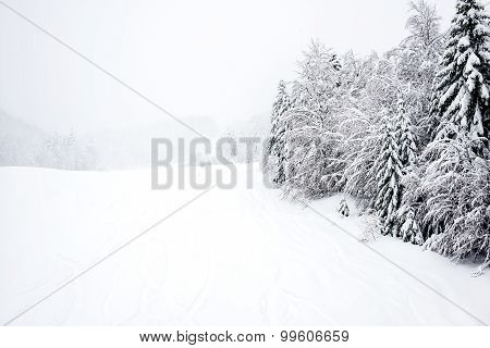 Ski slopes, coniferous forest in 'Kolasin 1450' mountain s