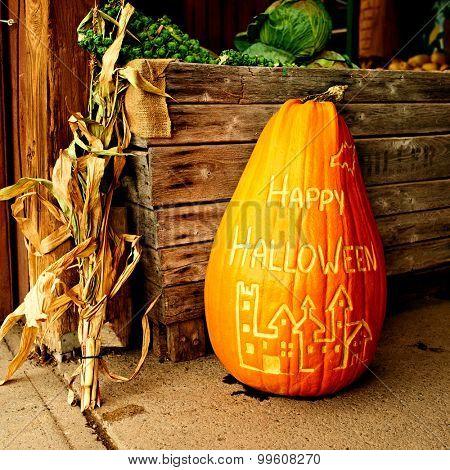 Pumpkin for halloween sale on autumn market