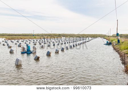 Aquacultural Farm For Oysters