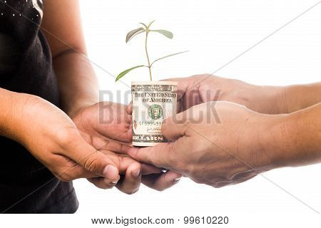 Concept Of Presenting Plant Growing From Usd Currency, Symbolizing Growing Financial Wealth