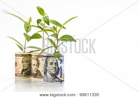 Concept Of Green Plant Grow On Us Dollar Currency Note