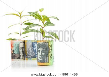 Concept Of Green Plant Grow On Australian Dollar Currency Note