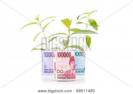 Concept Of Green Plant Grow On Indonesia Rupiah Currency Note