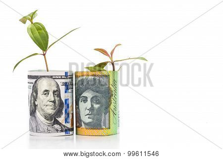 Concept Of Green Plant Grow On Usd Against Australian Dollar Currency