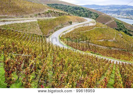 grand cru vineyard of Cote Rotie, Rhone-Alpes, France