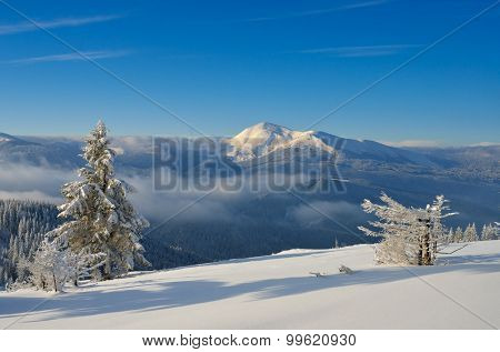 Winter landscape in the mountains. Sunny frosty day. Christmas view. Carpathians, Ukraine, Europe
