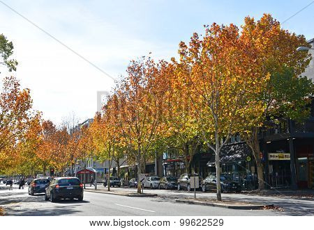 Autumn In Lygon Street, Melbourne