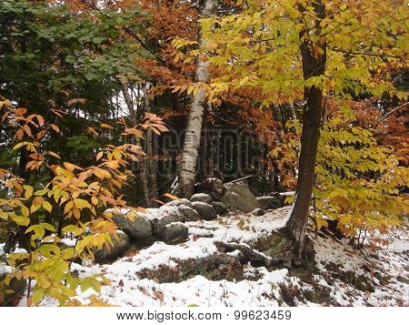 Colorful trees and snow