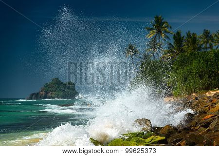 Ocean wave breaking on rocky coast with palm trees. Sri Lanka