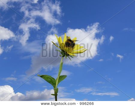 Beeflower 003