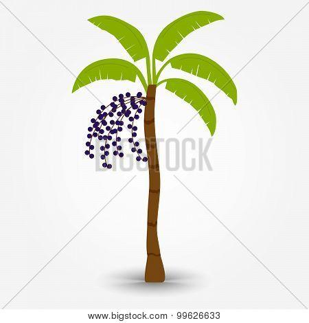 Acai Tree