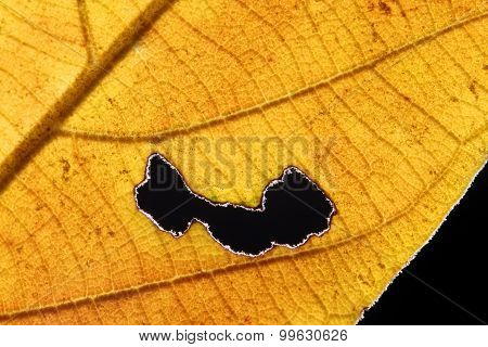 Burned Hole On Leaf Isolated With Black Background