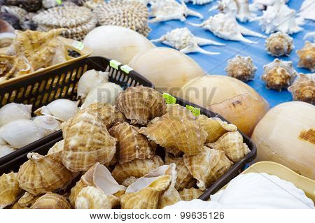 Various Seashells Put Up For Sale