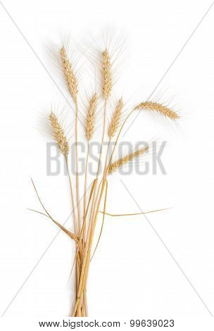 Several Stems Of Wheat With Spikelets On A Light Background