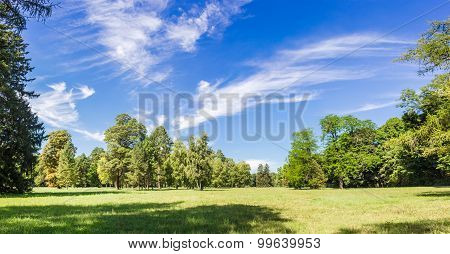Glade In The Park In A Summer Sunny Day
