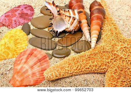 Starfish, Seashells And Cockleshells On The Sand