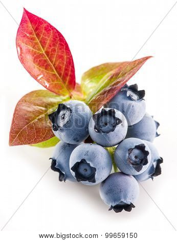 Ripe blueberries on the white background.