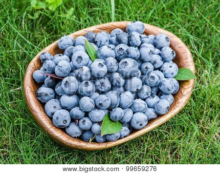 Ripe blueberries in the wooden bowl over green grass.