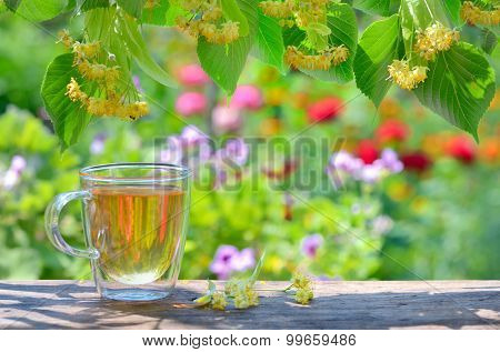 cup with linden tea and flowers in garden
