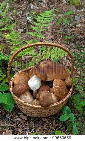Porcini In Basket