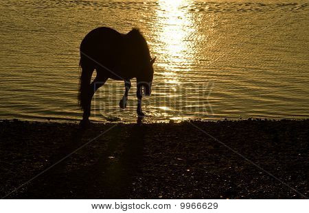 Horse in silhouette.