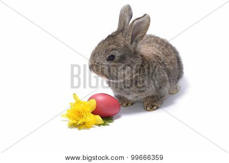 Rabbit And Easter Eggs On  White Background