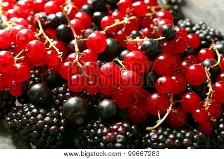 Forest berries background
