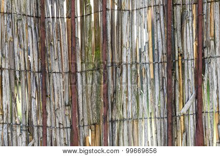 Abstract View Of Rotten Reeds