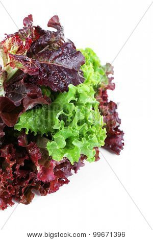 Bunch of lettuce isolated on white