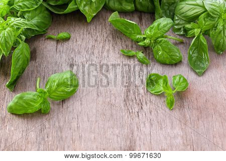 Green fresh basil on wooden background