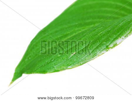 Fresh green leaf with drops on nature background