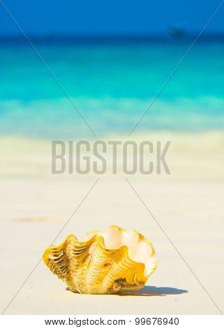 Tropical Symbol Idyllic Image