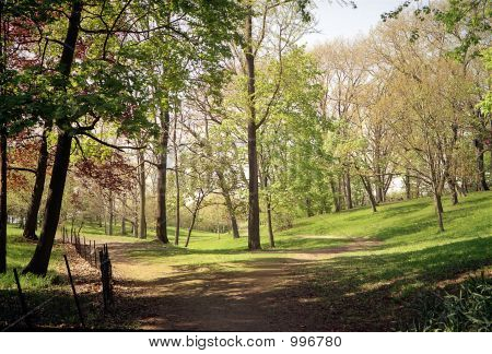 Stock Photo, Glade Of Trees In Early Spring